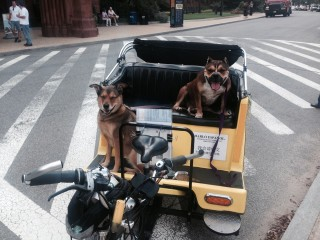 Dog Friendly Tours of Washington DC