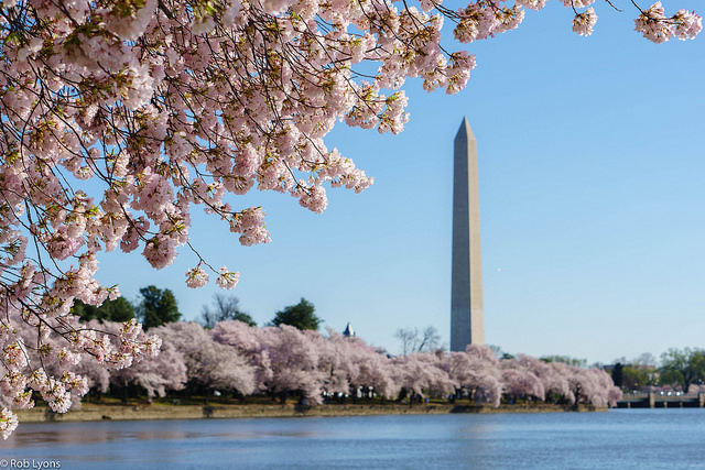 Cherry Blossoms Tour