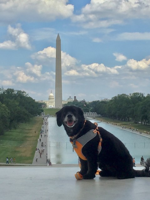 Dog Friendly Tours at the Lincoln Memorial