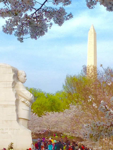 MLK Memorial Cherry Blossoms