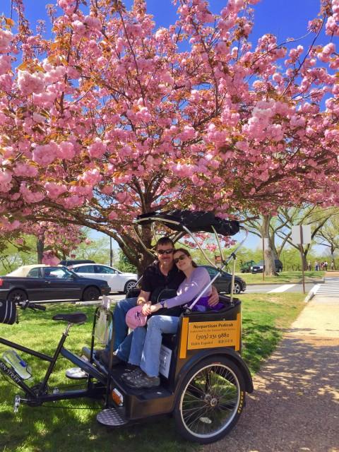 cherry blossom tour