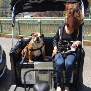 Dog Friendly tour in Washington DC
